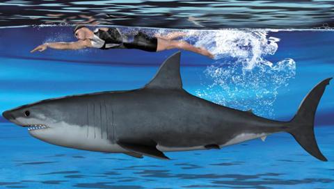 419b658dfd6 상어비늘로 전신수영복을? : 네이버 블로그
