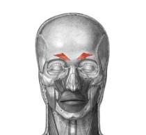 머리와 목의 근육 : 네이버 블로그